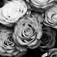 PFC Rose